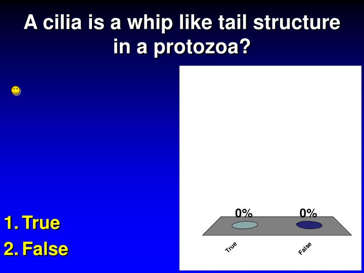 A cilia is a whip like tail structure in a protozoa?