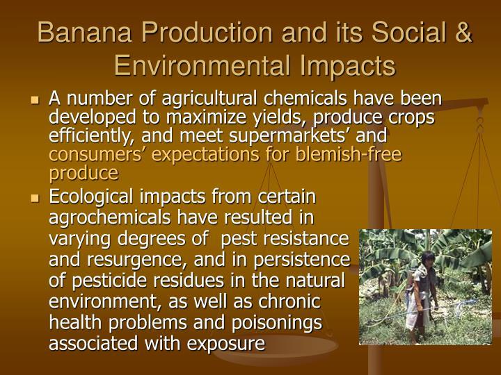 Banana Production and its Social & Environmental Impacts