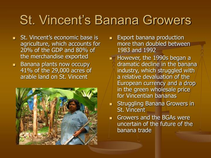 St. Vincent's economic base is agriculture, which accounts for 20% of the GDP and 80% of the merchandise exported