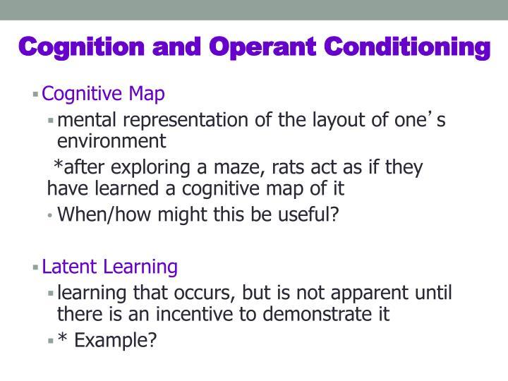 Cognitive Map