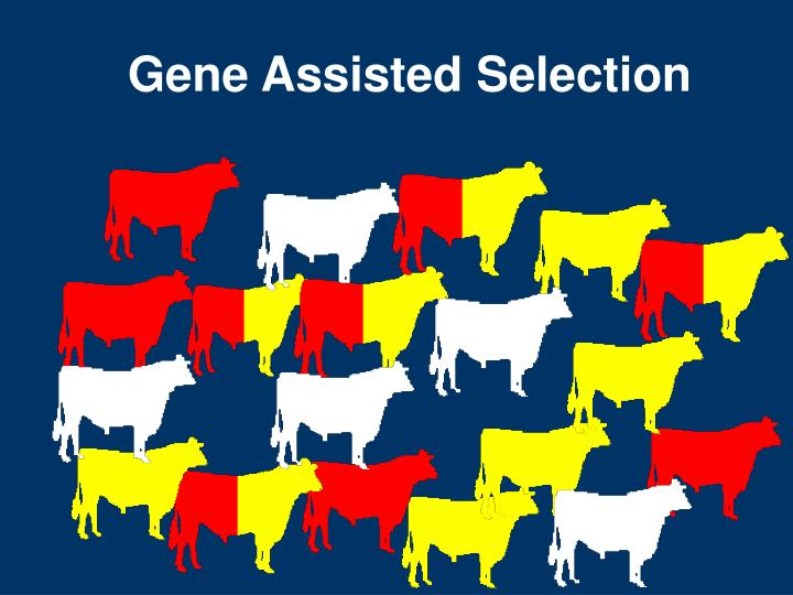 Gene Assisted Selection