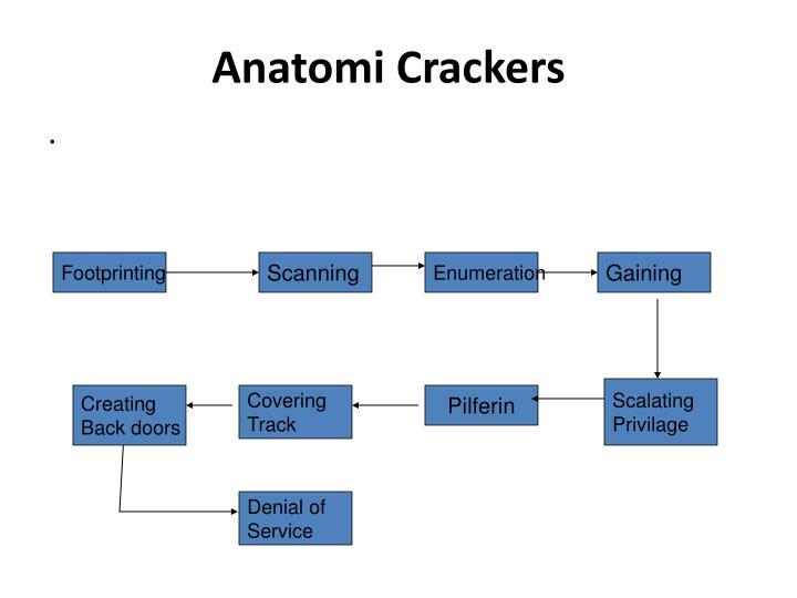 Anatomi Crackers