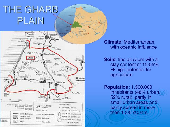 THE GHARB PLAIN