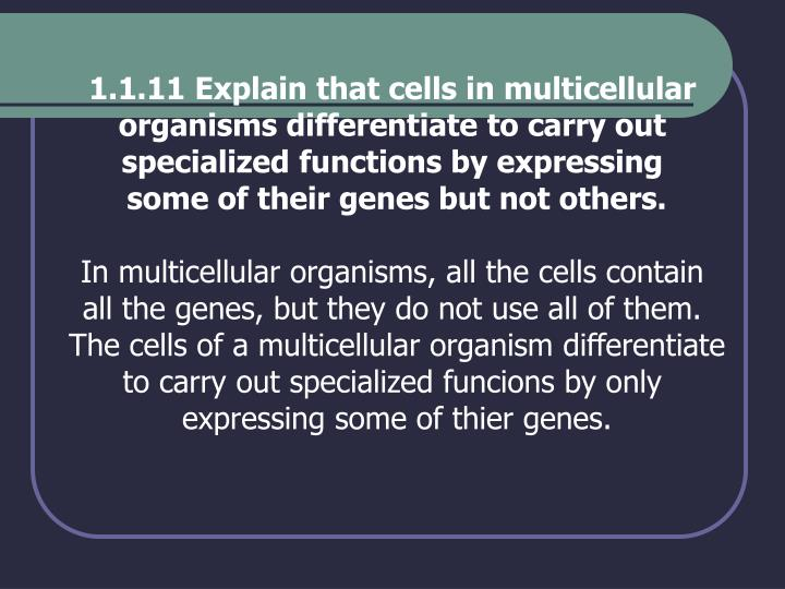 1.1.11 Explain that cells in multicellular