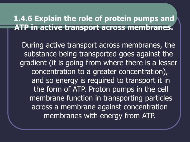 1.4.6 Explain the role of protein pumps and