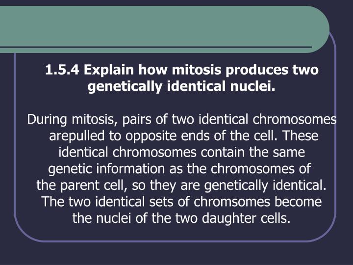 1.5.4 Explain how mitosis produces two