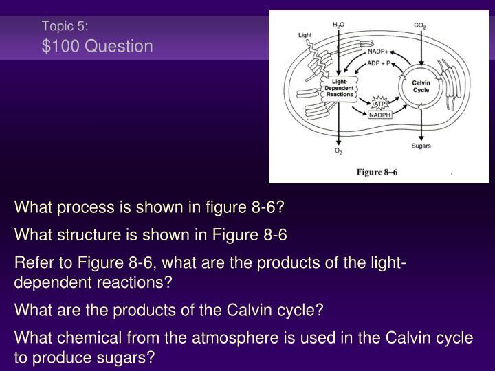 Topic 5:
