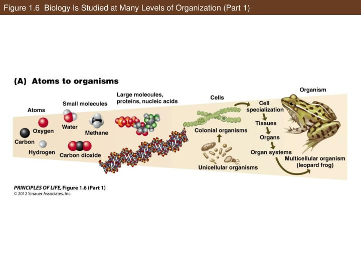 Figure 1.6  Biology Is Studied at Many Levels of Organization (Part 1)