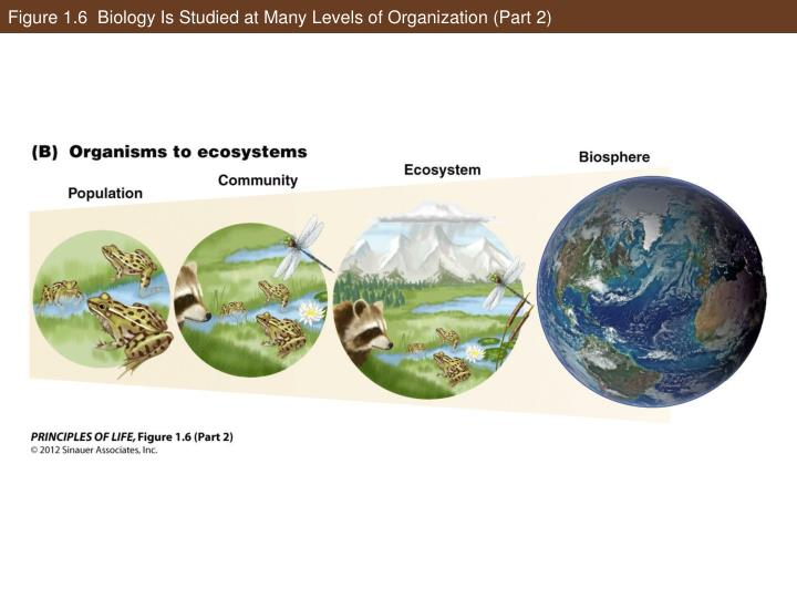 Figure 1.6  Biology Is Studied at Many Levels of Organization (Part 2)