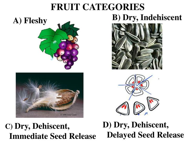 FRUIT CATEGORIES