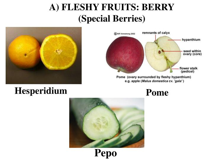 A) FLESHY FRUITS: BERRY