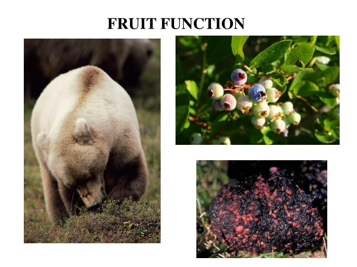 FRUIT FUNCTION