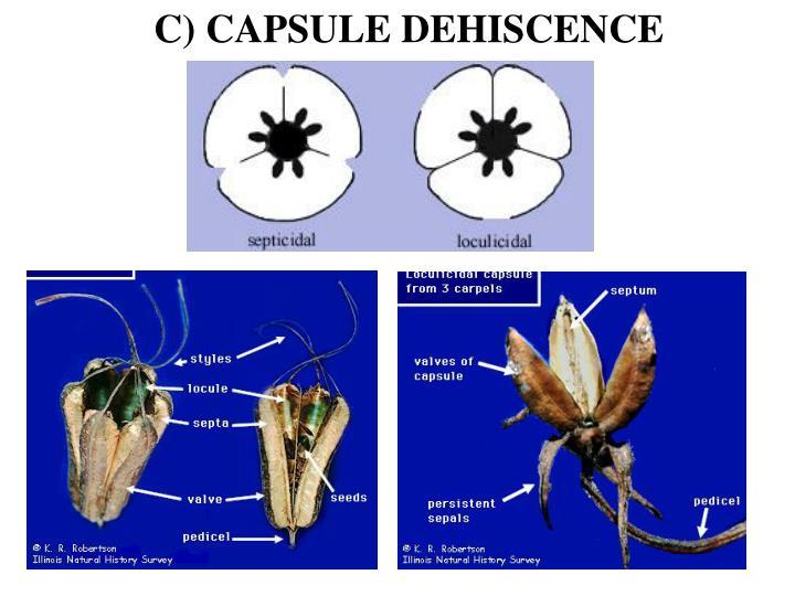 C) CAPSULE DEHISCENCE