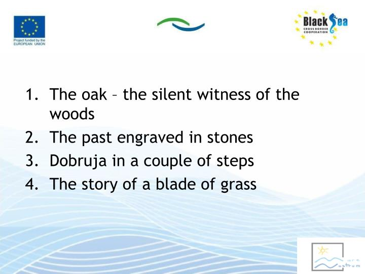 The oak – the silent witness of the woods