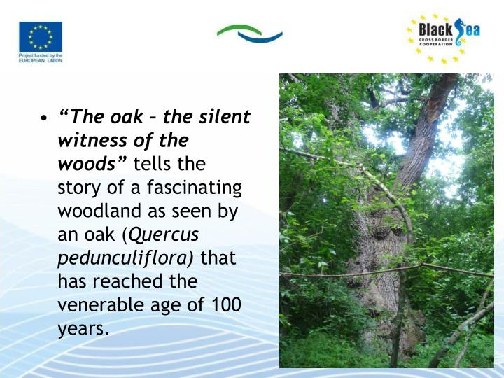 """The oak – the silent witness of the woods"""