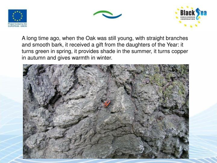 A long time ago, when the Oak was still young, with straight branches and smooth bark, it received a gift from the daughters of the Year: it turns green in spring, it provides shade in the summer, it turns copper in autumn and gives warmth in winter.