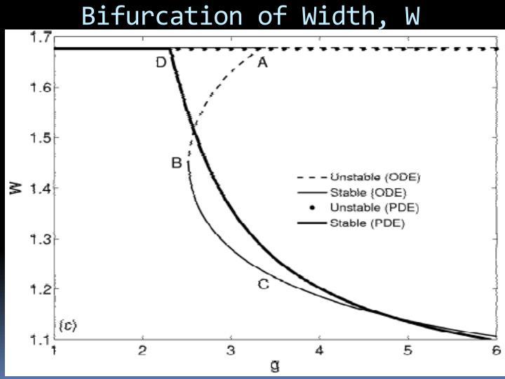 Bifurcation of Width, W