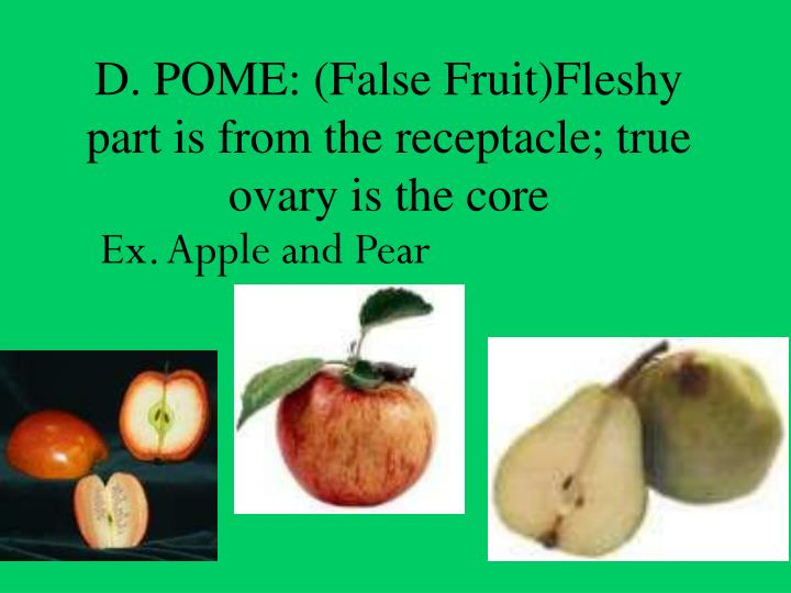 D. POME: (False Fruit)Fleshy part is from the receptacle; true ovary is the core