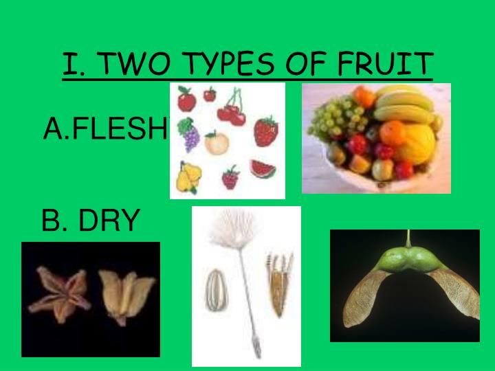 I. TWO TYPES OF FRUIT
