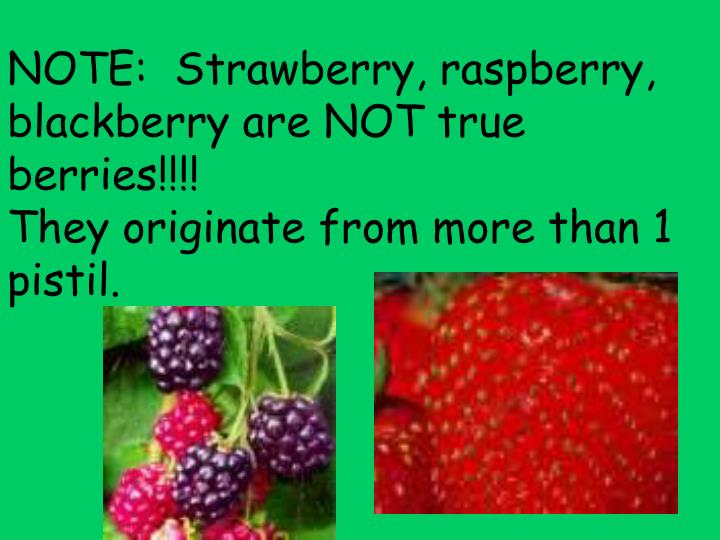 NOTE:  Strawberry, raspberry, blackberry are NOT true berries!!!!