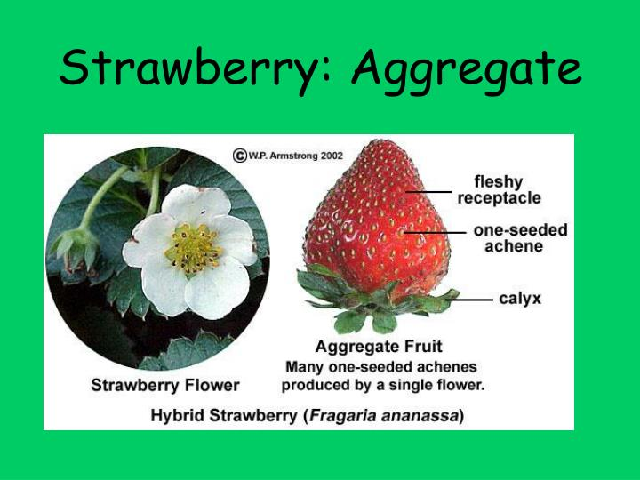 Strawberry: Aggregate