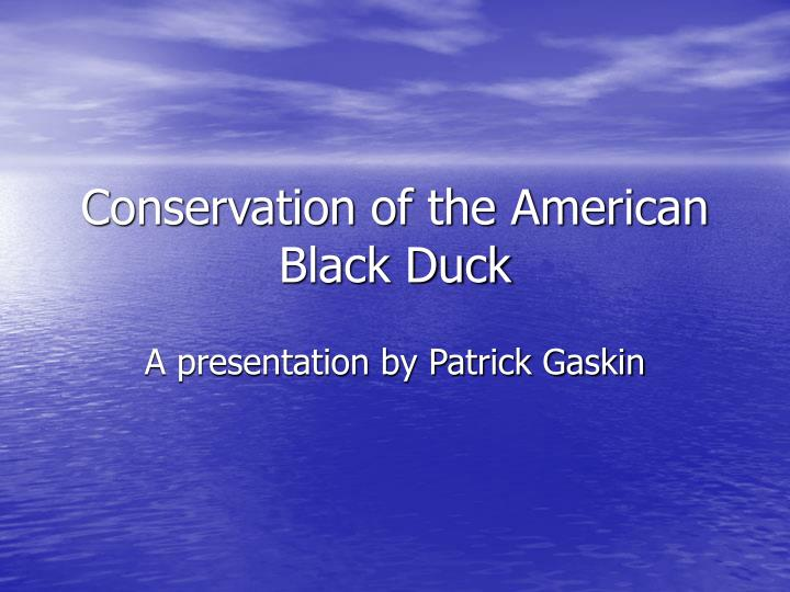 Conservation of the american black duck