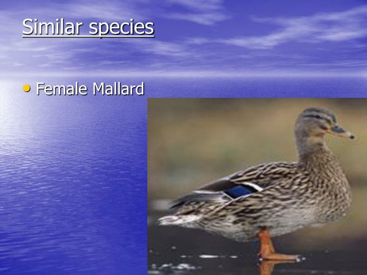 Similar species