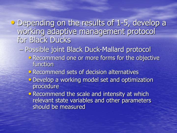 Depending on the results of 1-5, develop a working adaptive management protocol for Black Ducks