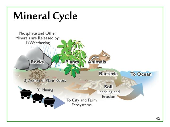 Mineral Cycle