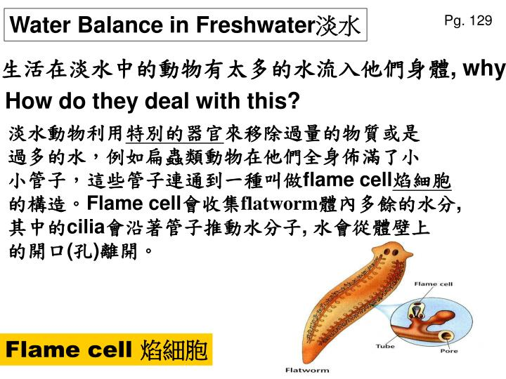 Water Balance in Freshwater