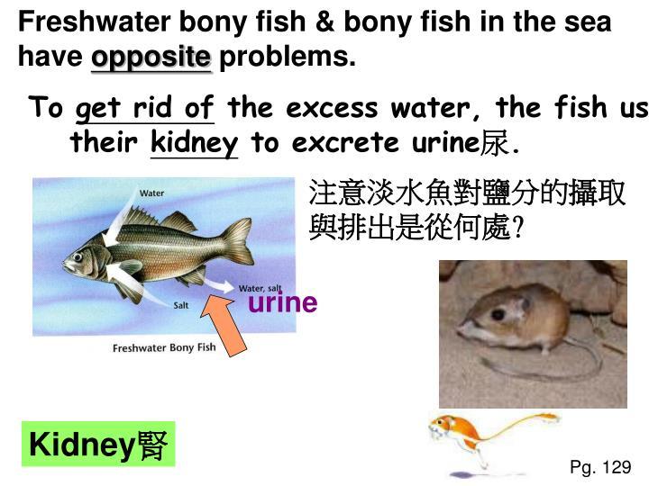 Freshwater bony fish & bony fish in the sea