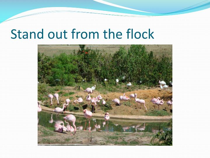 Stand out from the flock