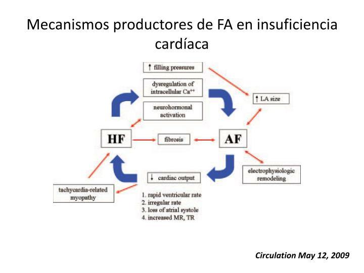 Mecanismos productores de FA en insuficiencia cardíaca