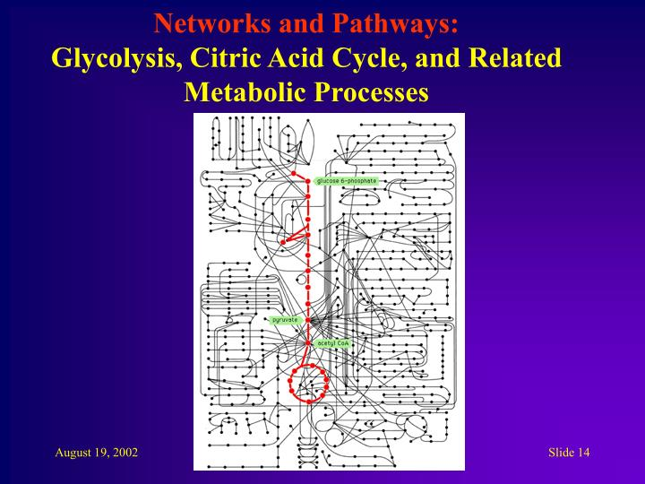 Networks and Pathways: