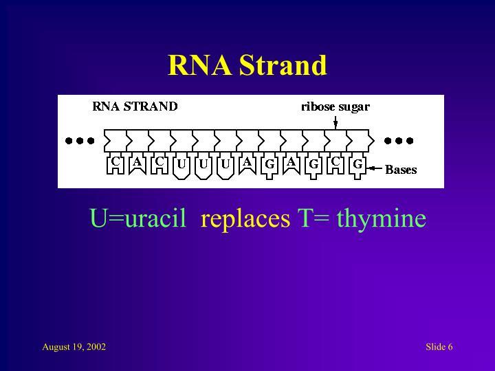 RNA Strand