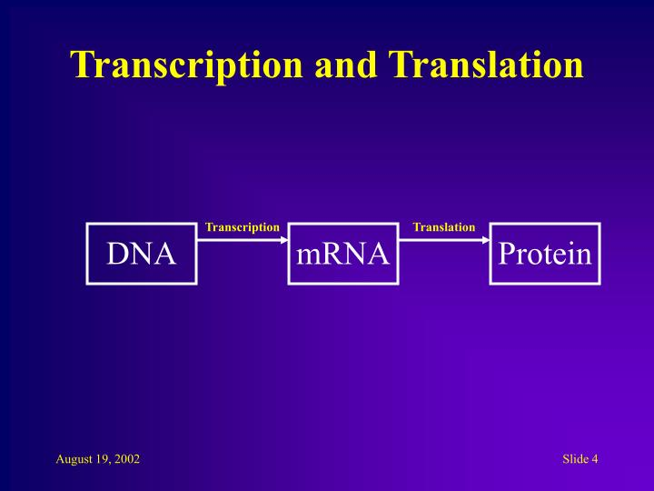 Transcription and