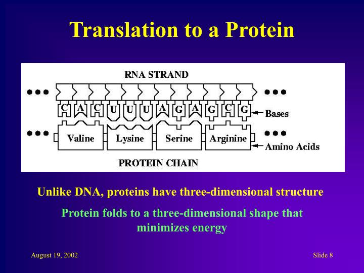 Translation to a Protein