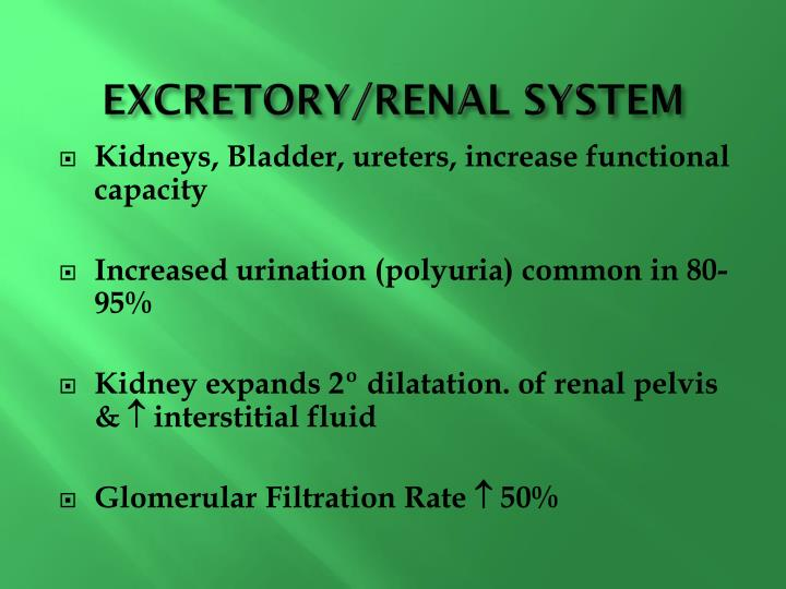 Excretory renal system