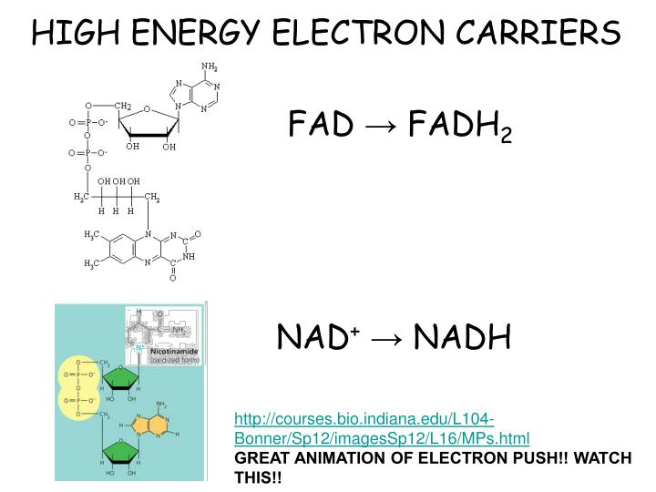 HIGH ENERGY ELECTRON CARRIERS