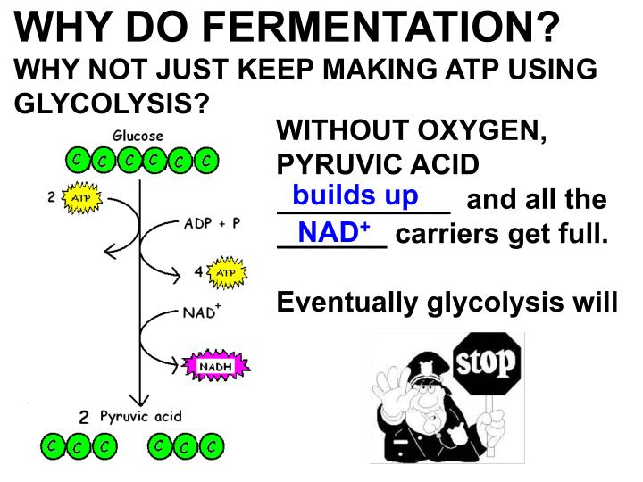WHY DO FERMENTATION?