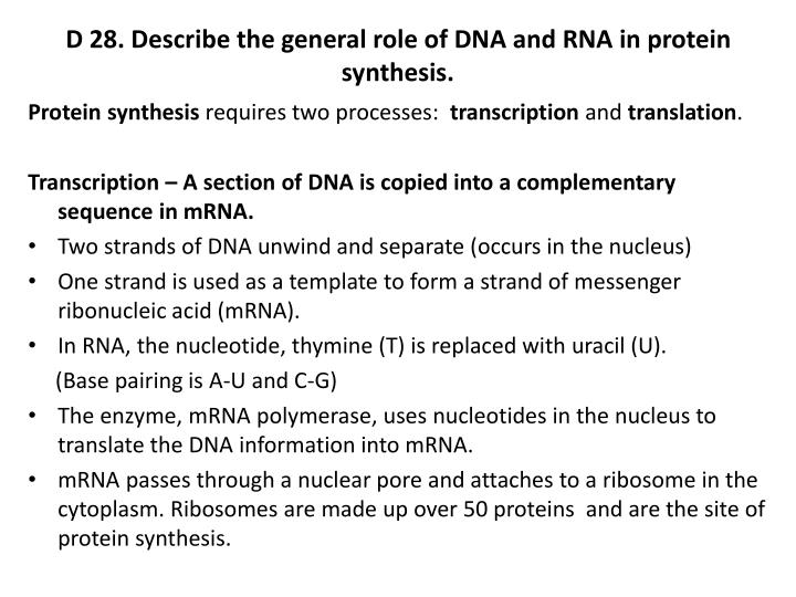 D 28. Describe the general role of DNA and RNA in protein synthesis.
