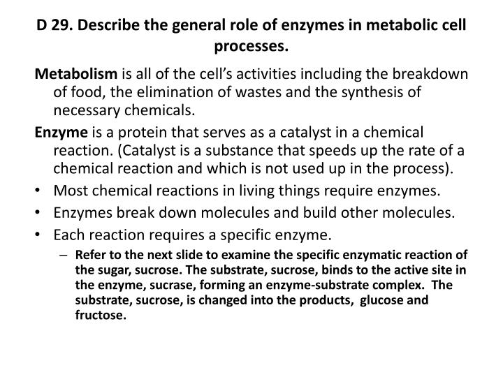 D 29. Describe the general role of enzymes in metabolic cell processes.