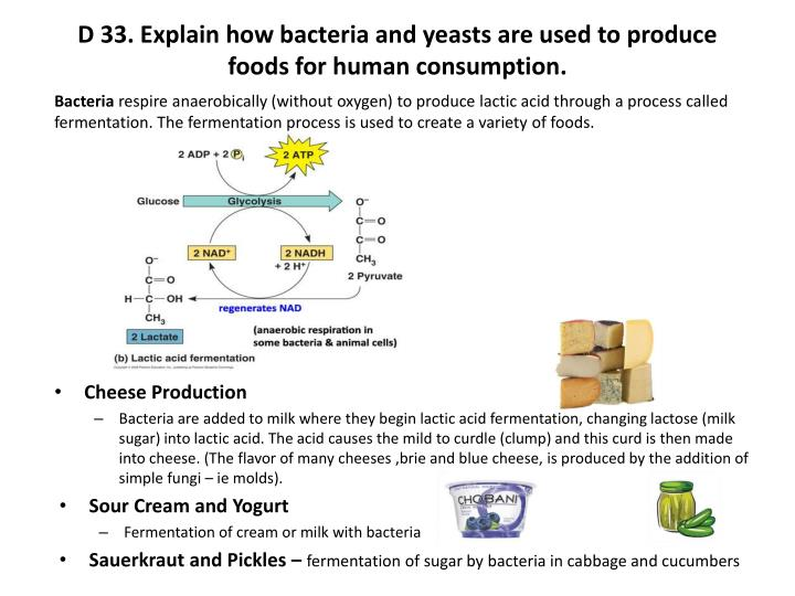 D 33. Explain how bacteria and yeasts are used to produce foods for human consumption.