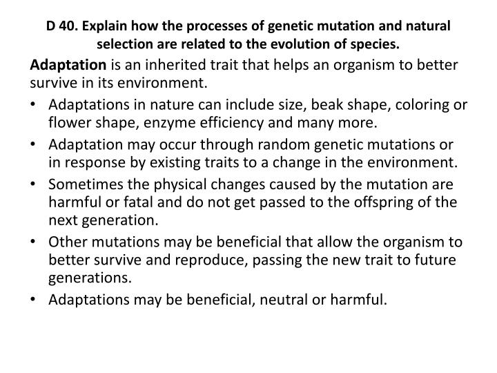 D 40. Explain how the processes of genetic mutation and natural selection are related to the evolution of species.