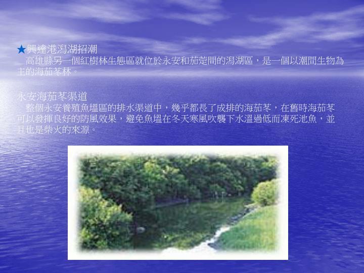 興達港潟湖招潮