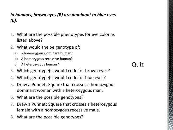 In humans, brown eyes (B) are dominant to blue eyes (b).
