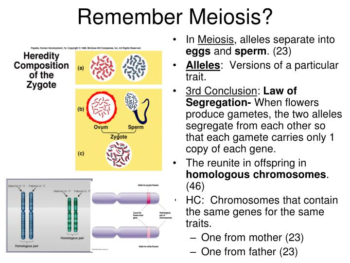 Remember Meiosis?