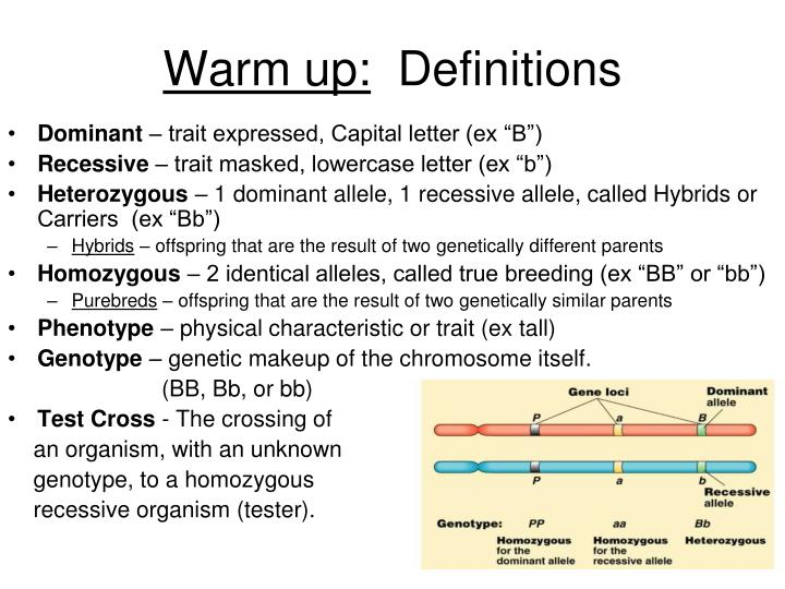 Warm up definitions