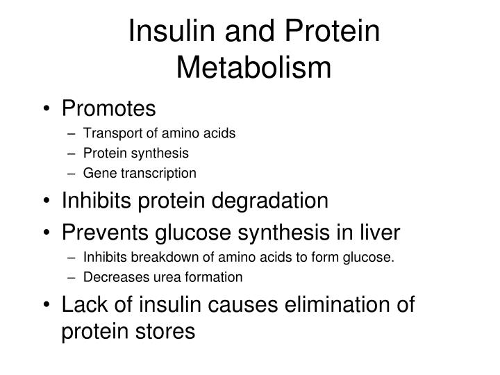 Insulin and Protein Metabolism