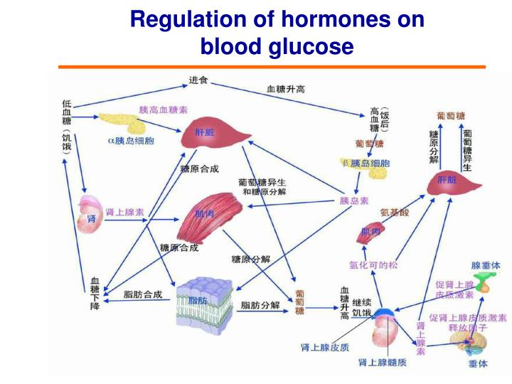 Regulation of hormones on